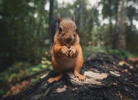 一组可爱的野生小松鼠写真图片欣赏