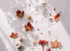 一组超有意境的枫叶唯美图片欣赏