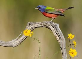 精致小巧的小鸟,透露着别样的可爱