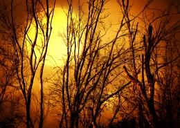 傍晚大树剪影景色图片_8张