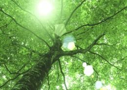 参天大树和阳光图片_25张