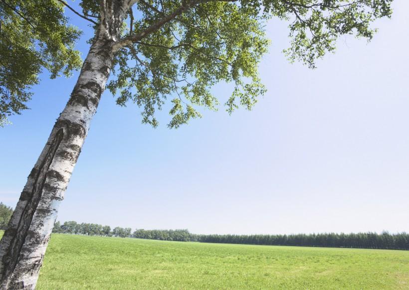 草地与大树的图片_19张