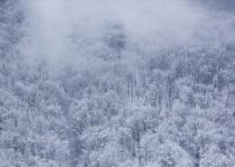 银装素裹的冬季图片_10张