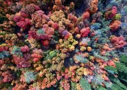森林俯瞰图片_18张