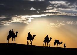 荒漠骆驼人物行走图片_10张