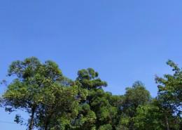 白云蓝天风景图片_14张