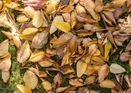 秋季凋零的枯黄落叶图片_11张