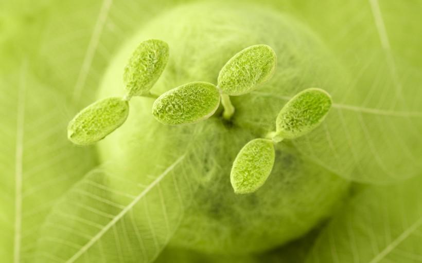 绿色与自然图片_40张