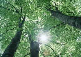 绿树遮阴图片_103张