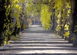 秋季马路图片_19张