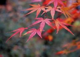 秋日的红叶图片_12张