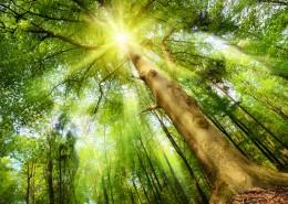 热带雨林风景图片_17张