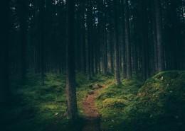 山林中的小路图片_15张