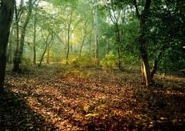 树林图片_8张