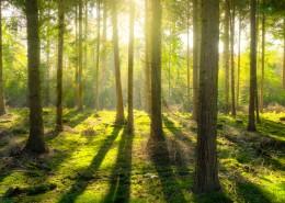树林森林图片_10张