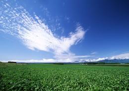 草原和蔚蓝的天空图片_16张