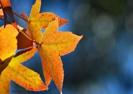 唯美的秋叶风景图片_10张