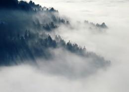 山林中的雾图片_13张