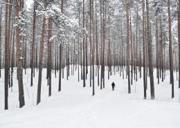雪中的枝桠图片_15张