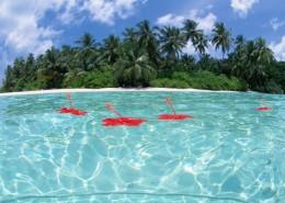 椰树海滨风景图片_32张