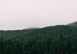 一片茂盛的森林图片_14张