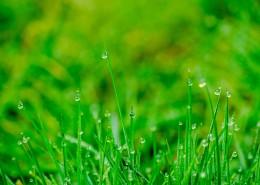 雨后的草丛图片_10张