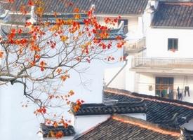 一组美丽婺源的秋天美景图片欣赏