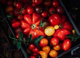 一组红红的好看番茄图片欣赏