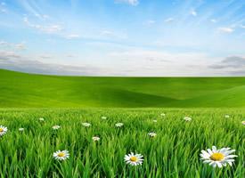 清新护眼植物花卉图片电脑壁纸