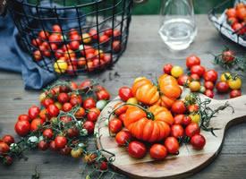 一组凹凸有致滴番茄图片欣赏