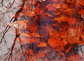 一池落叶,装扮秋天独有的那份浪漫