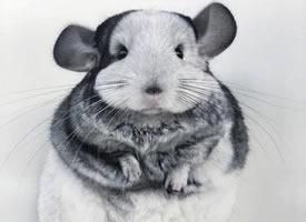 自带小棉袄的仓鼠,看起来就好暖啊