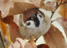 原来小麻雀也这么可爱的