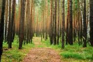 美国加州森林路径风景图片_19张