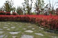 大蜀山森林公园风景图片_12张