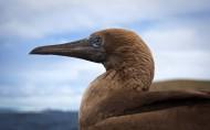 科隆群岛上的动物图片_10张