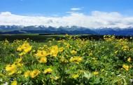 新疆喀拉峻草原风景图片_9张