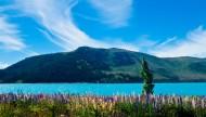 新西兰特卡波湖风景图片_17张