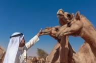 阿拉伯男人和骆驼与城市景观图片_15张