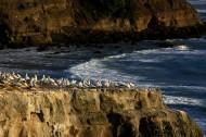 新西兰鸟岛风景图片_10张