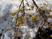 扬州雪景图片_15张