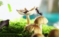 微距蚂蚁图片_9张