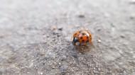 外观漂亮的甲虫图片_14张