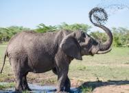 大象高清图片_11张