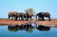 大象嬉水图片_10张