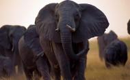 非洲野生动物图片_14张