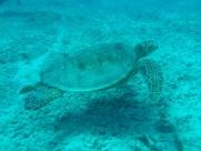 长寿的海龟图片_12张