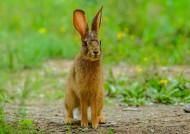 野兔图片_5张