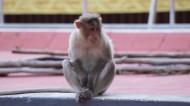 可爱的猴子图片_17张