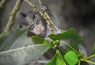 灰色的猴子图片_10张